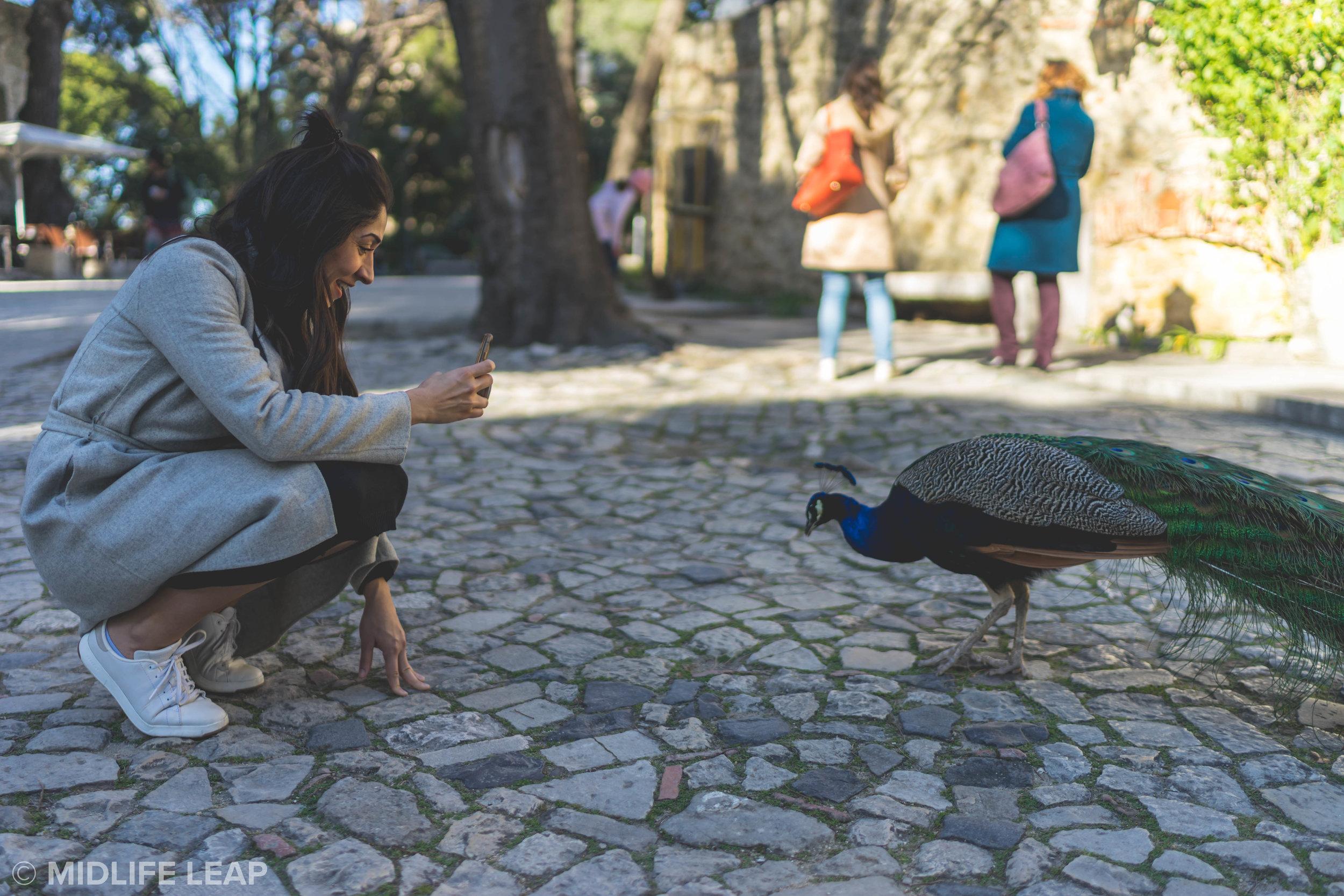 peacocks-at-castelo-de-sao-jorge-what-to-do-in-lisbon