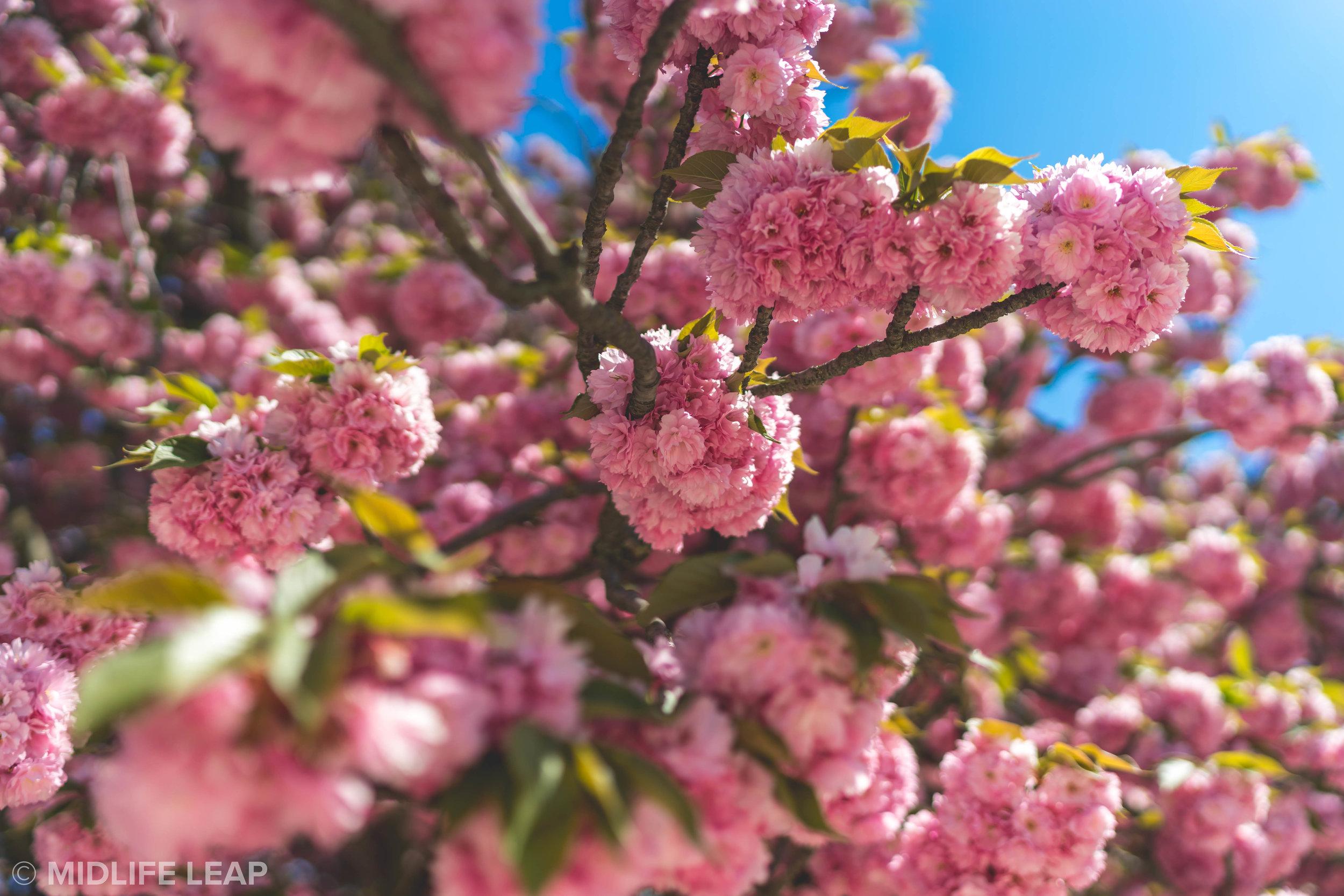 spring-time-in-paris-jardin-des-plantes