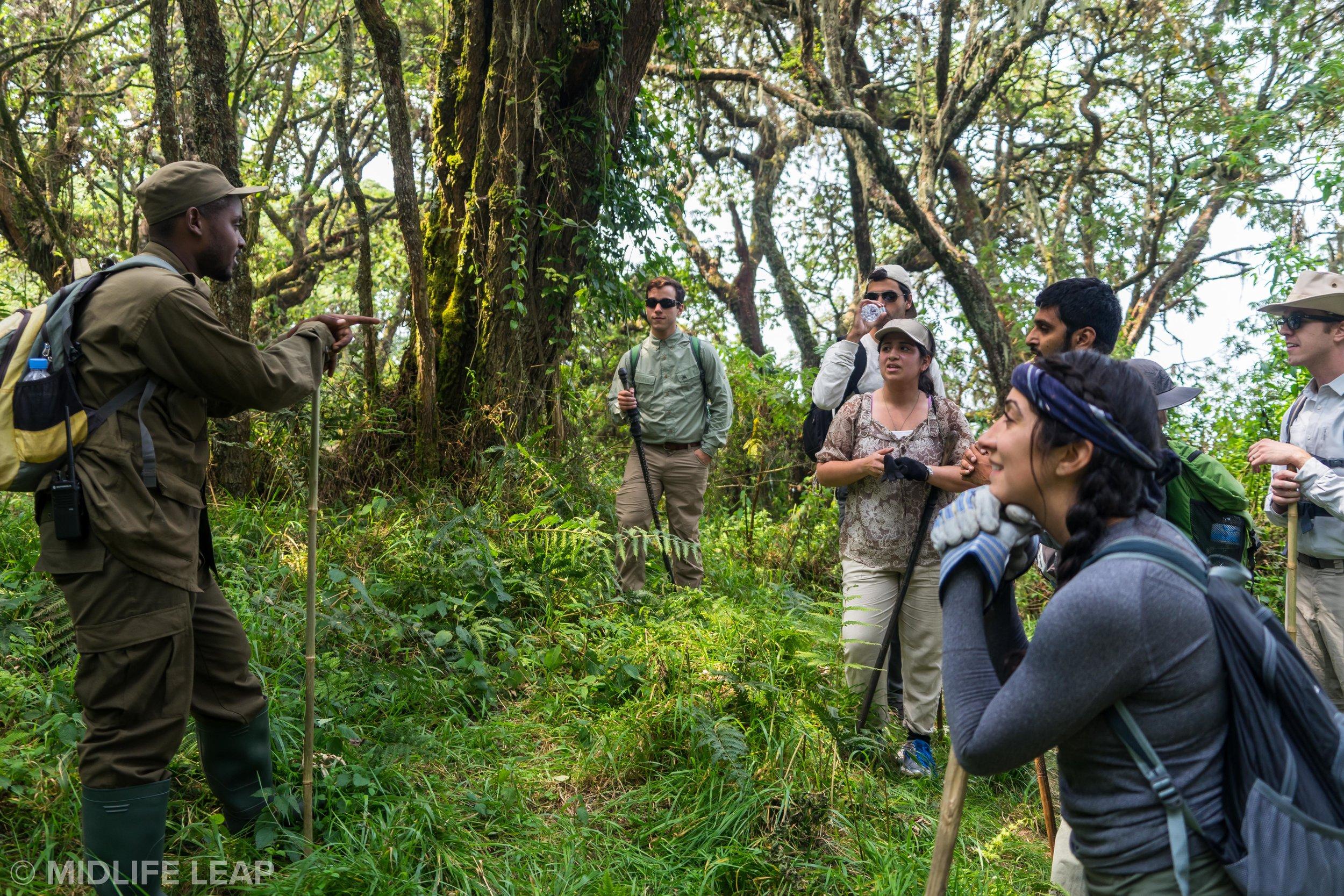 what-to-expect-on-a-gorilla-trek-rwanda