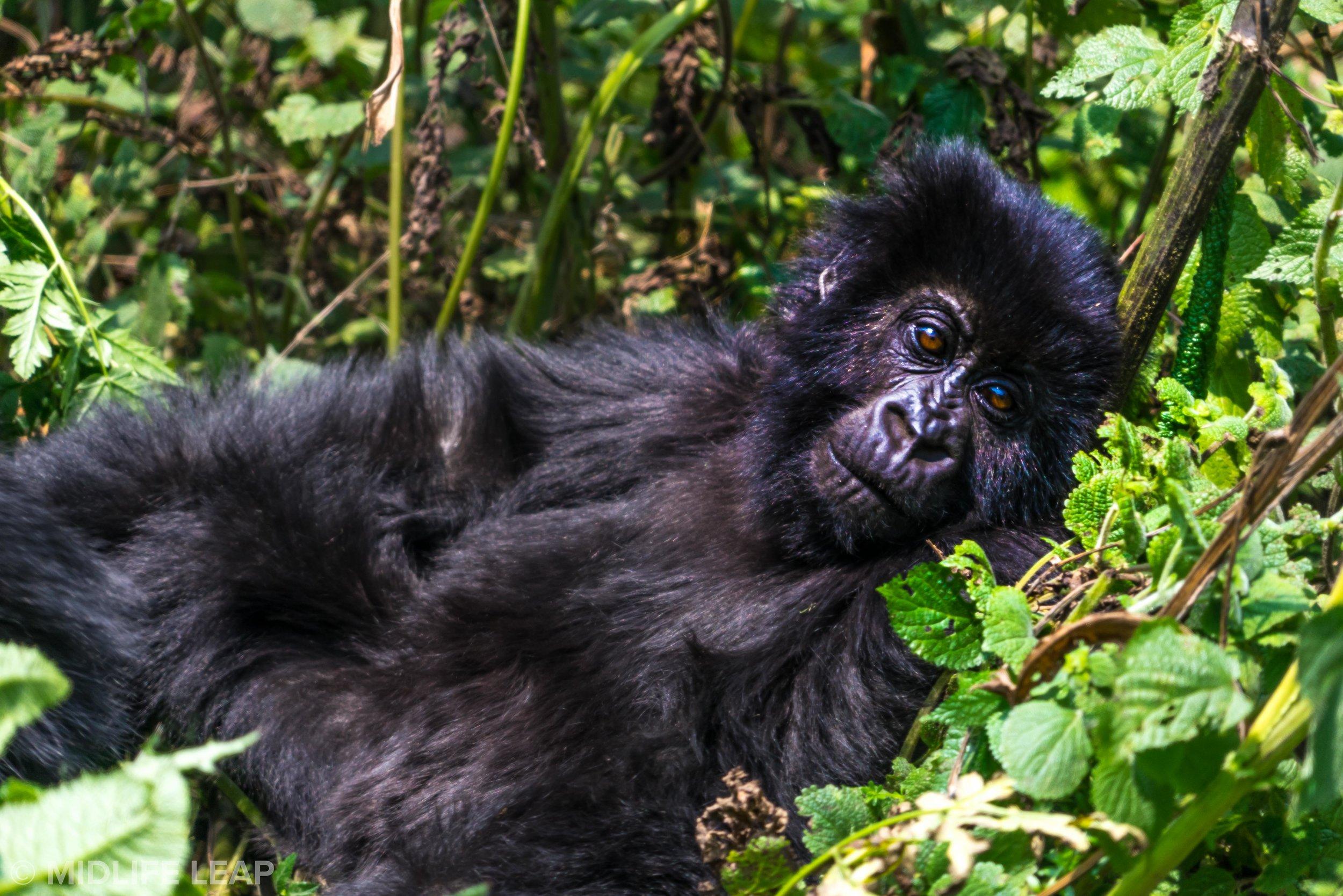best-country-for-a-gorilla-trek