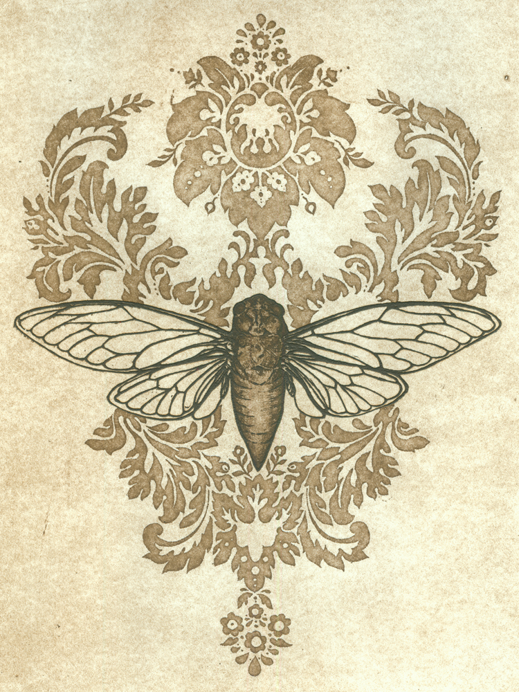 Insect Collection_Cicada Song.jpg