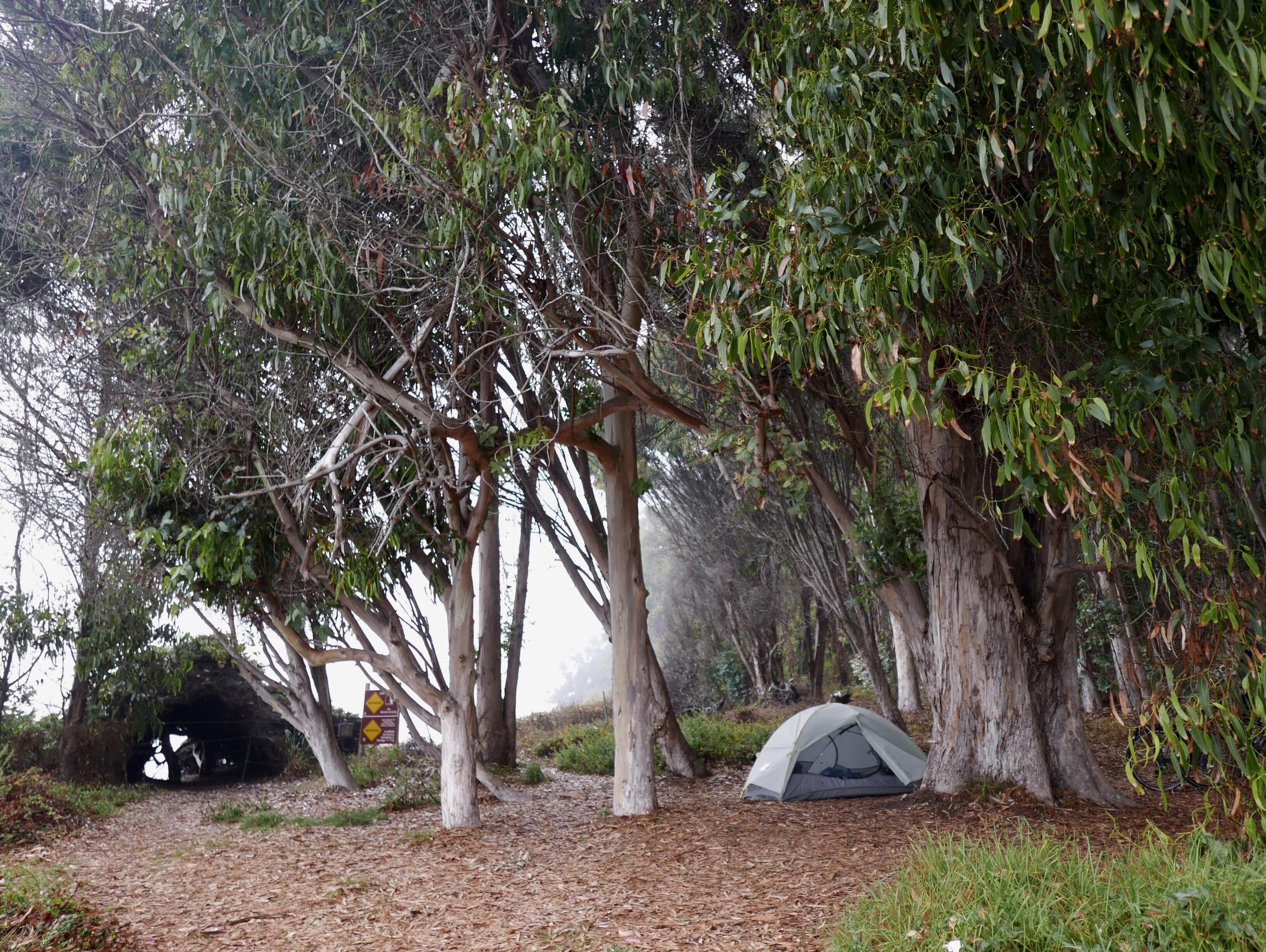 Housed among the eucalyptus.