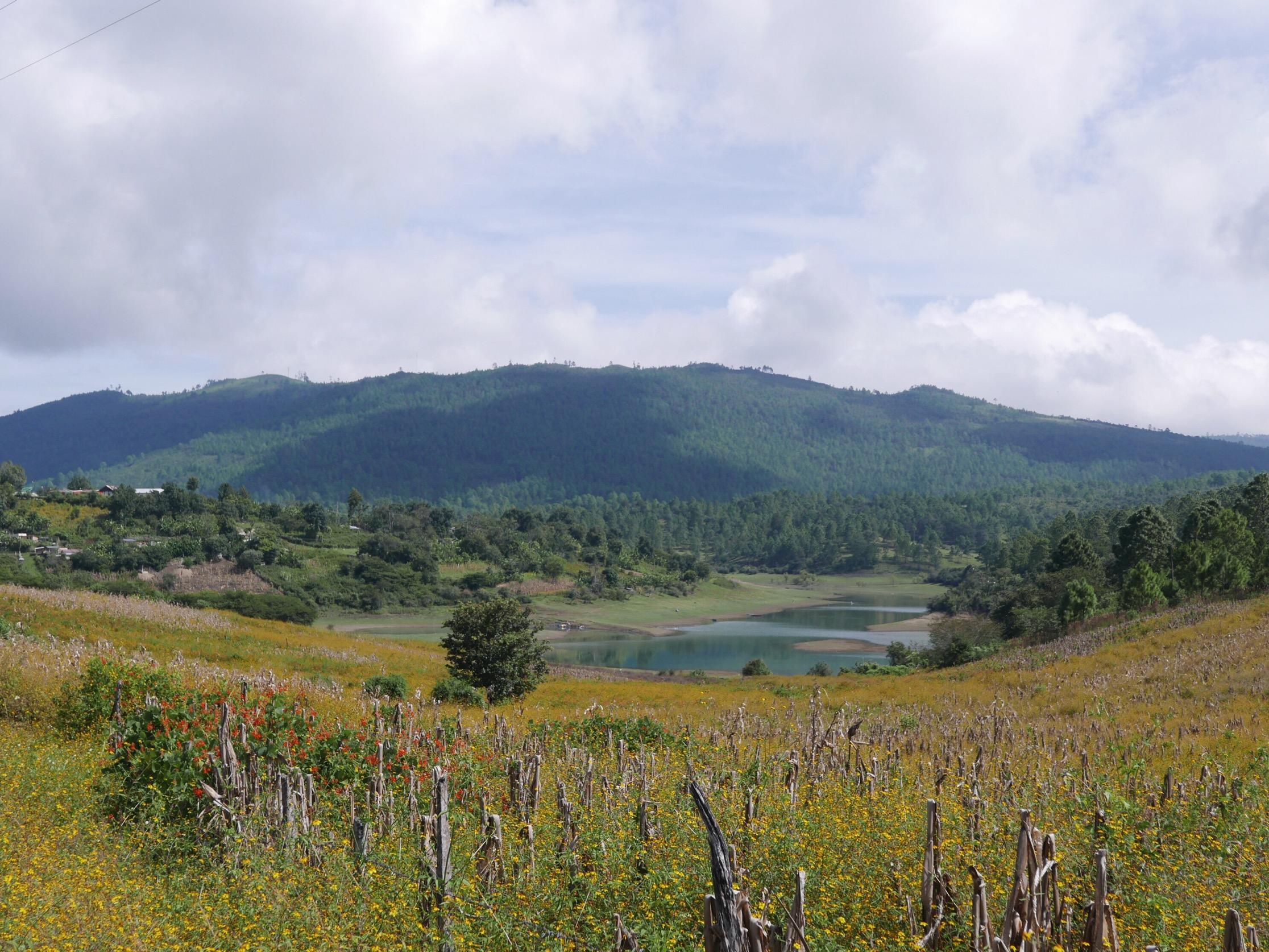 Wildflower fields outside Yaluma, Chiapas.
