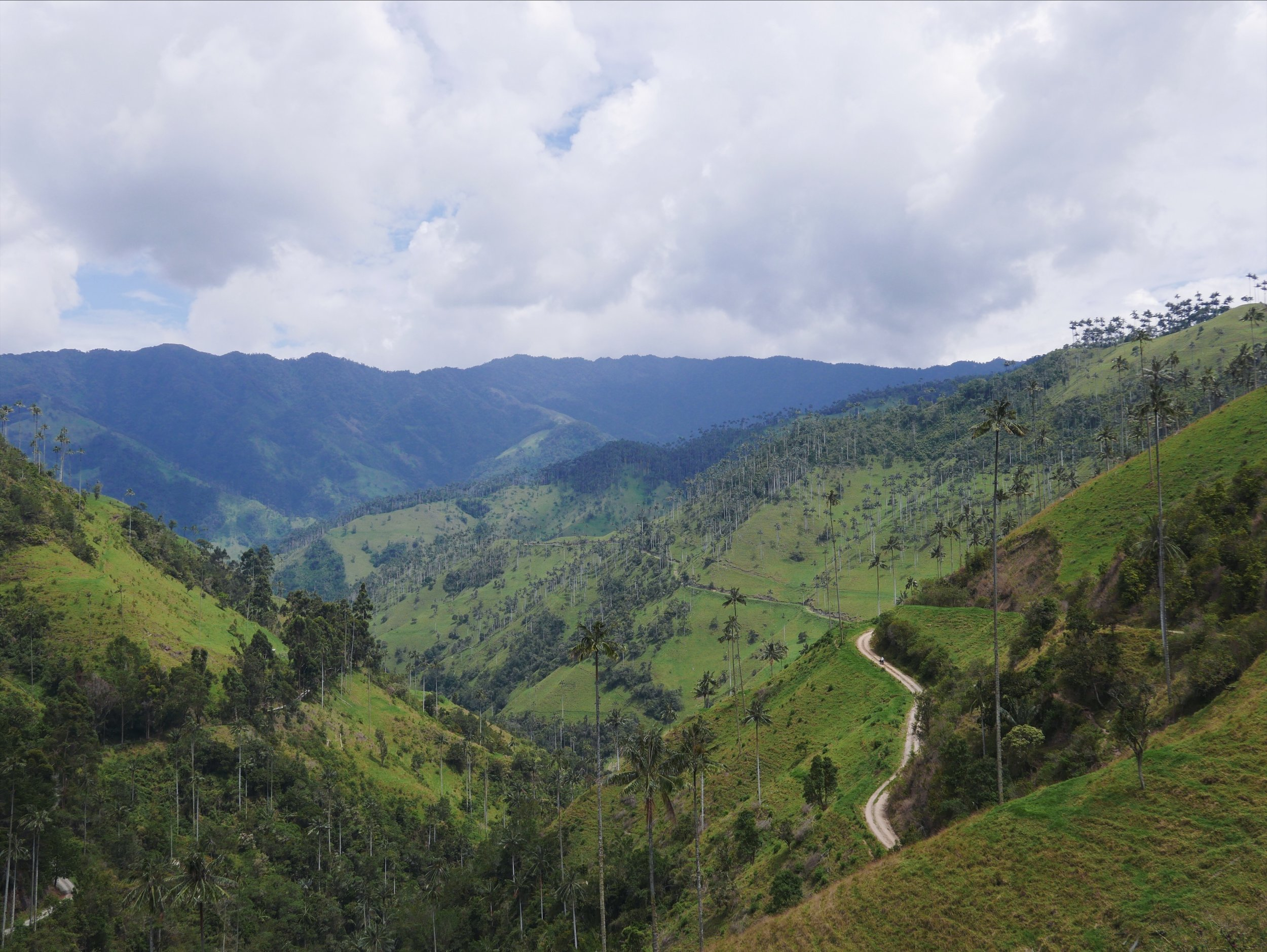 La Carbonera: The more bristled sister valley to the famous Valle de Cocora. Where the Cocora Valley hosts some manicured 900 palms, La Carbonera is estimated to hold over 2 million.