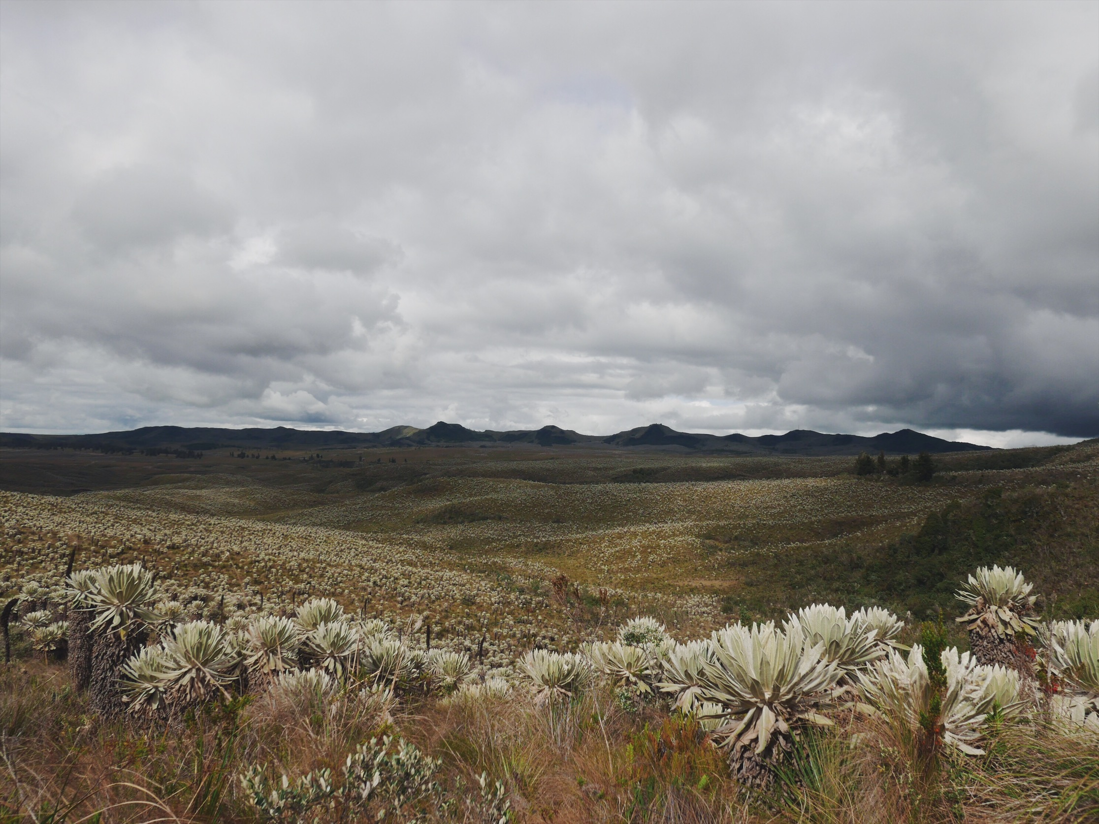 Only a few miles from the Colombian border, up past the farmlands, the landscape completely changes to something close to a cactus'd Wyoming.