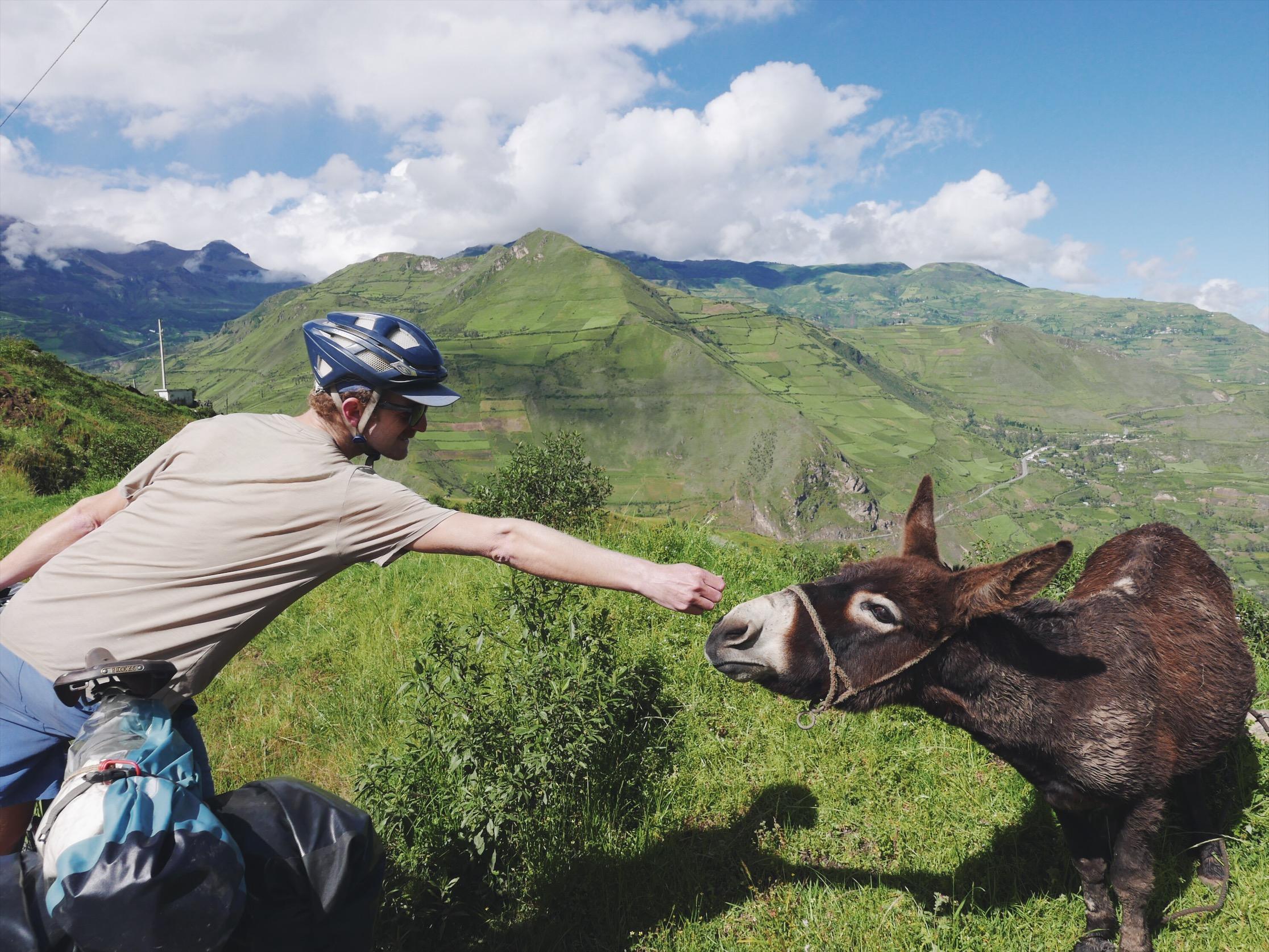 Google: Do donkeys bite?