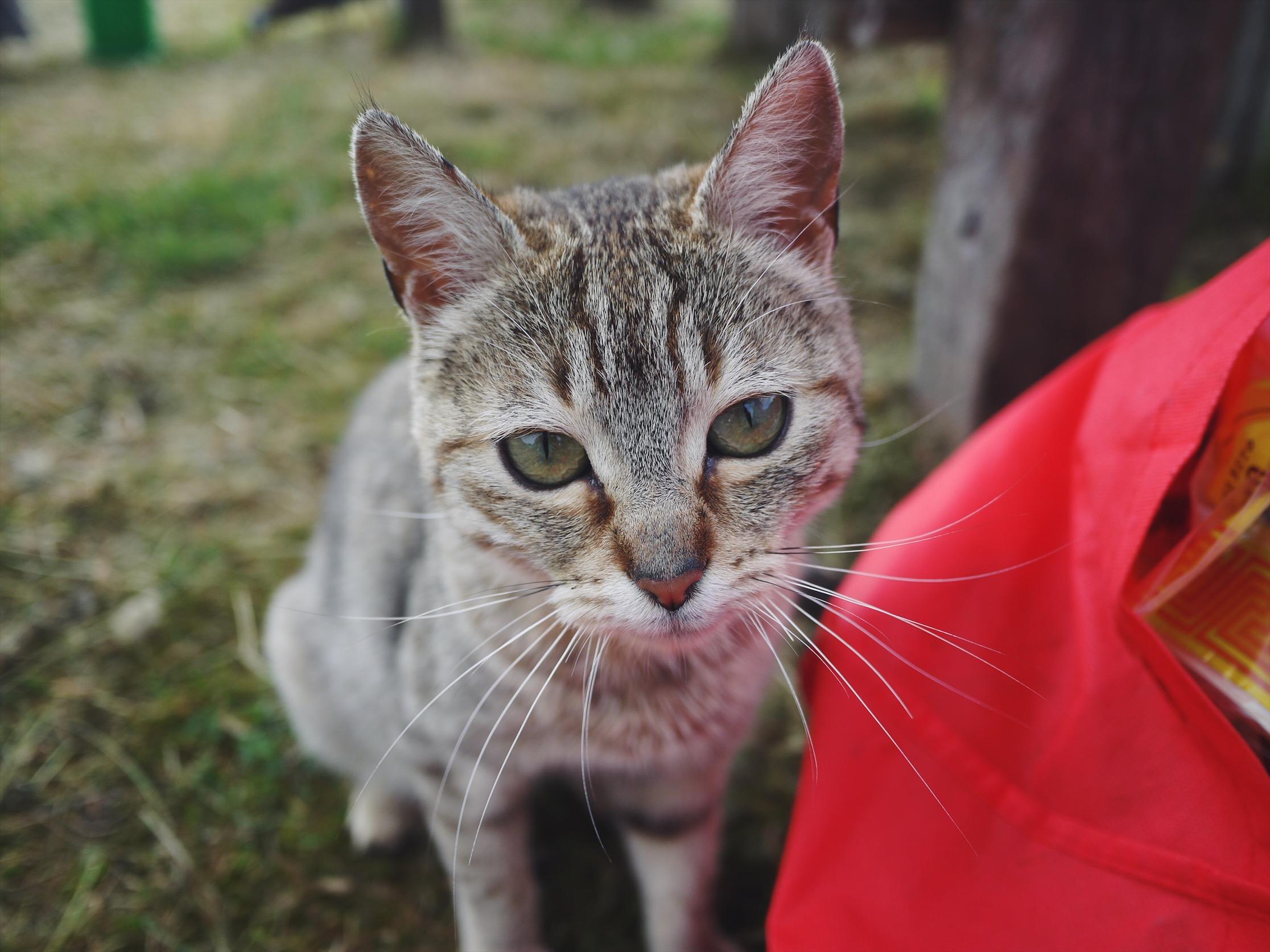 Camp cat, Pumpernickel.