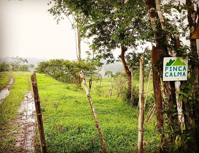 The calm farm is calling!  Offering home lot tours now, let's plan your trip :) #FincaCalma #puravida #vidacalma #costarica #farmlife