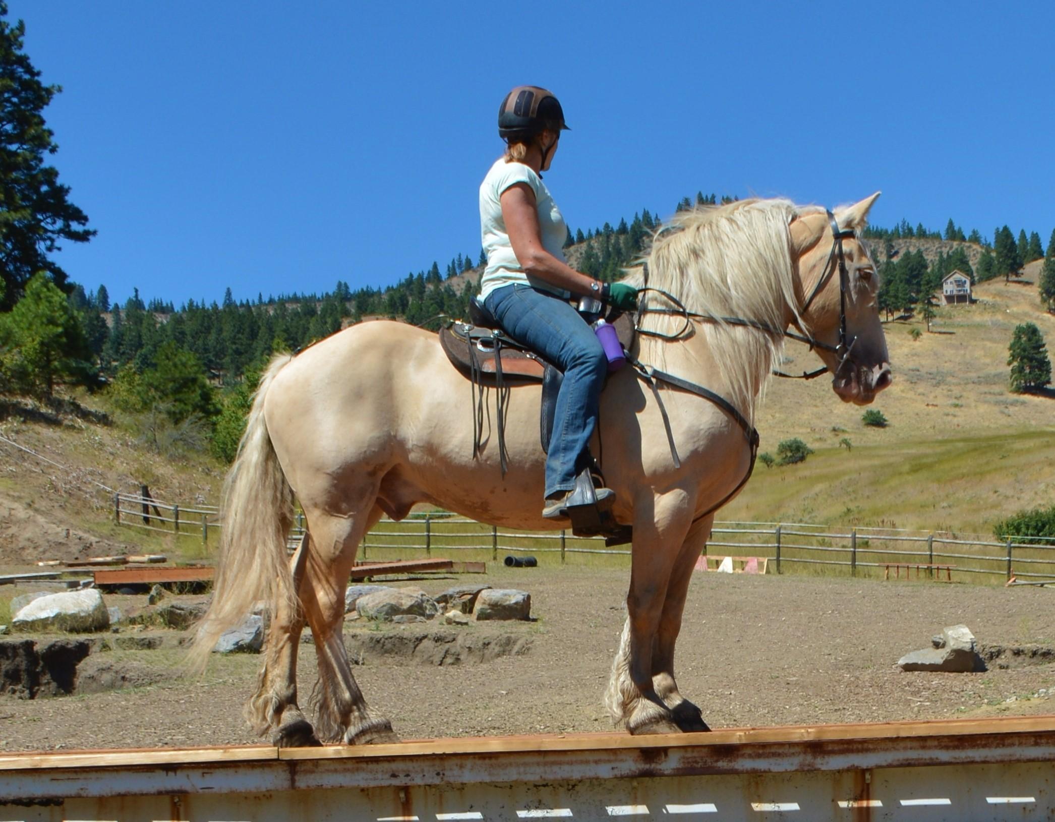 Horse Bios Rendezvous Ranch