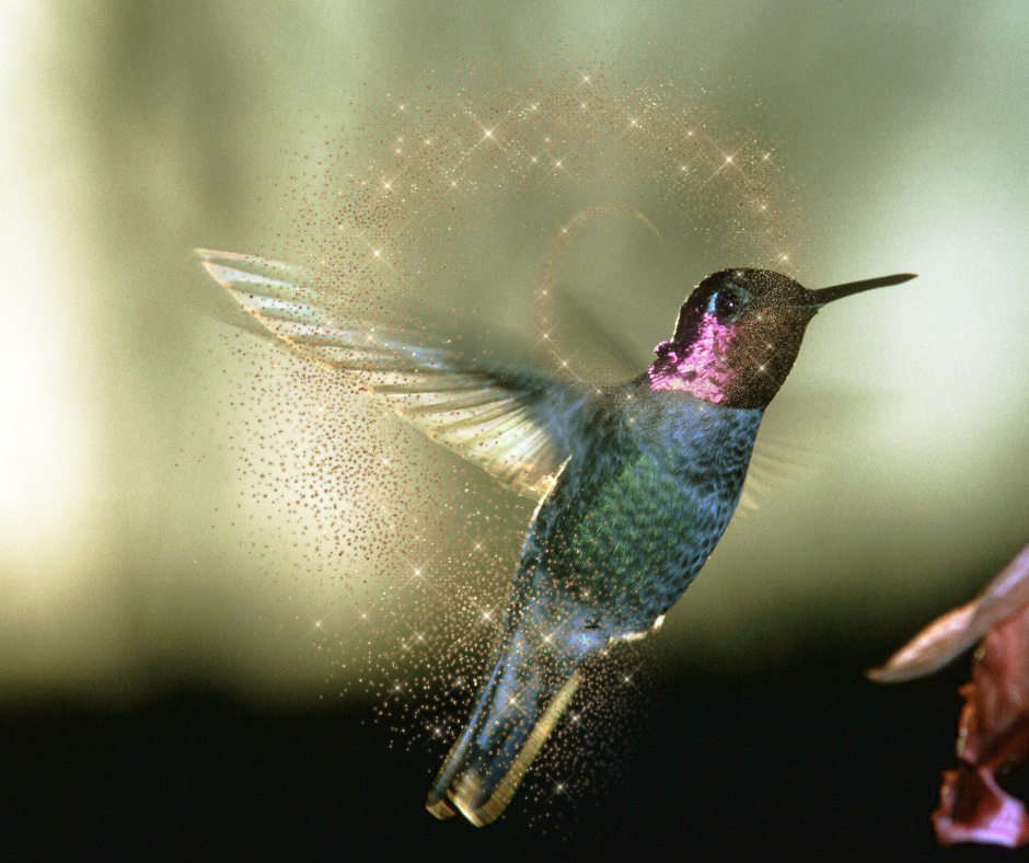 Hummingbird:Do you struggle to speak your truth?Do you fully know and understand yourself? -