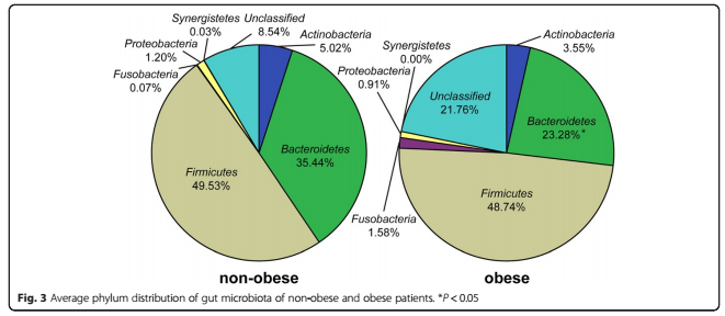 Figure of non-obese to obese individuals. Bacteriodetes, in green, is much lower in ratio in obese individuals in comparison to non-obese