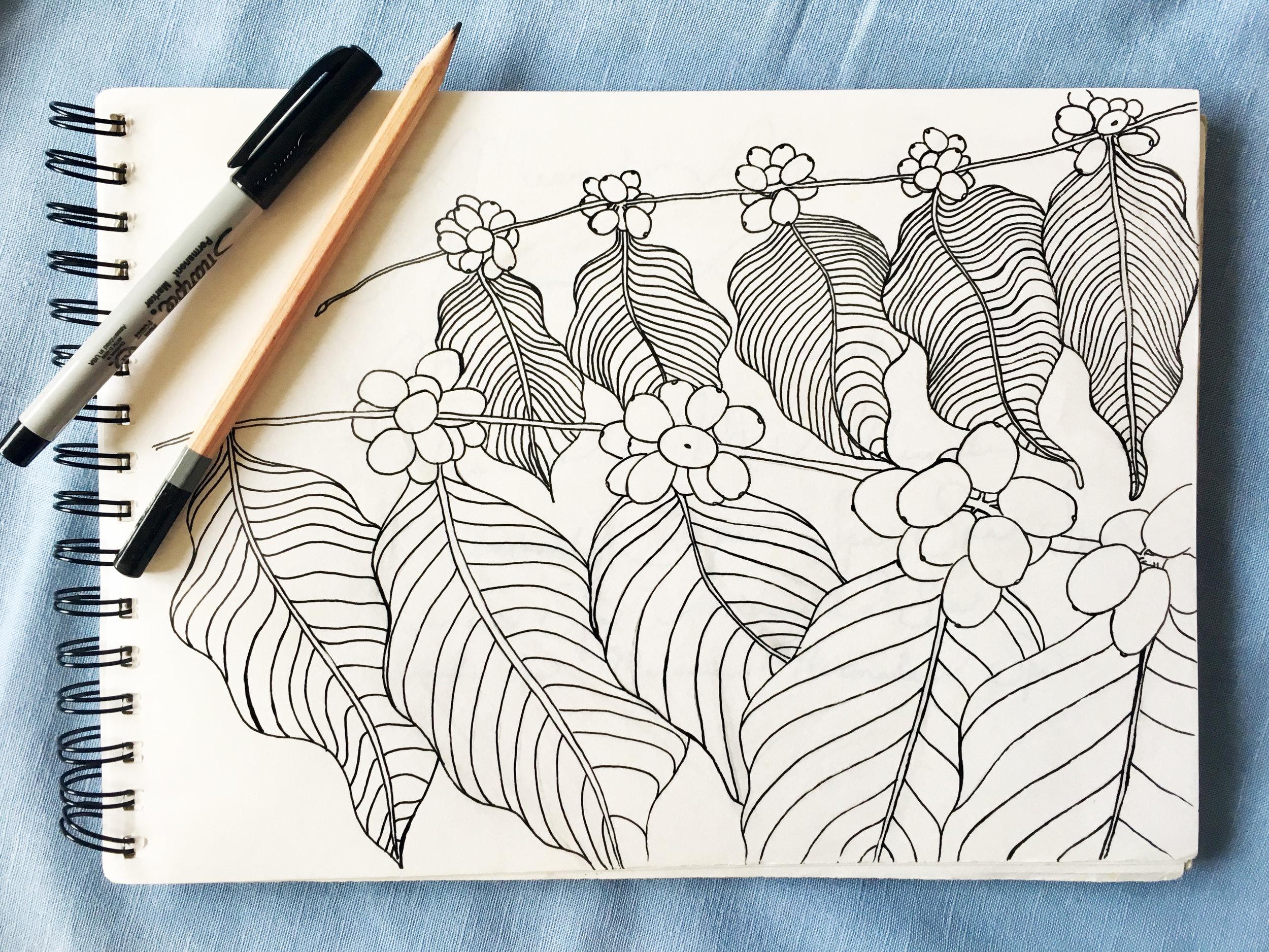 One of the original sketches of coffee cherry used in making the coffee print of the new Kona Coffee & Tea bags. PHOTO: Dayva Keolanui