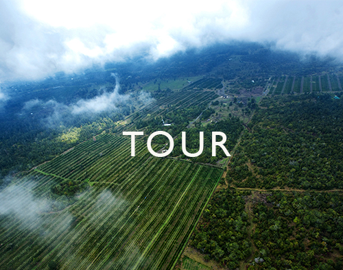 TOUR Kona Coffee and Tea 2018.jpg