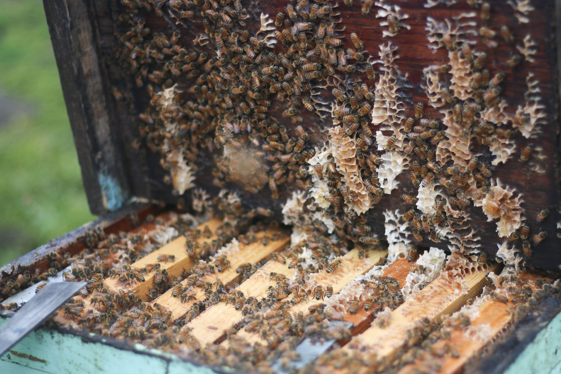 The view inside the beehive before the honeycomb is extracted. PHOTO: Chance Punahele Photography