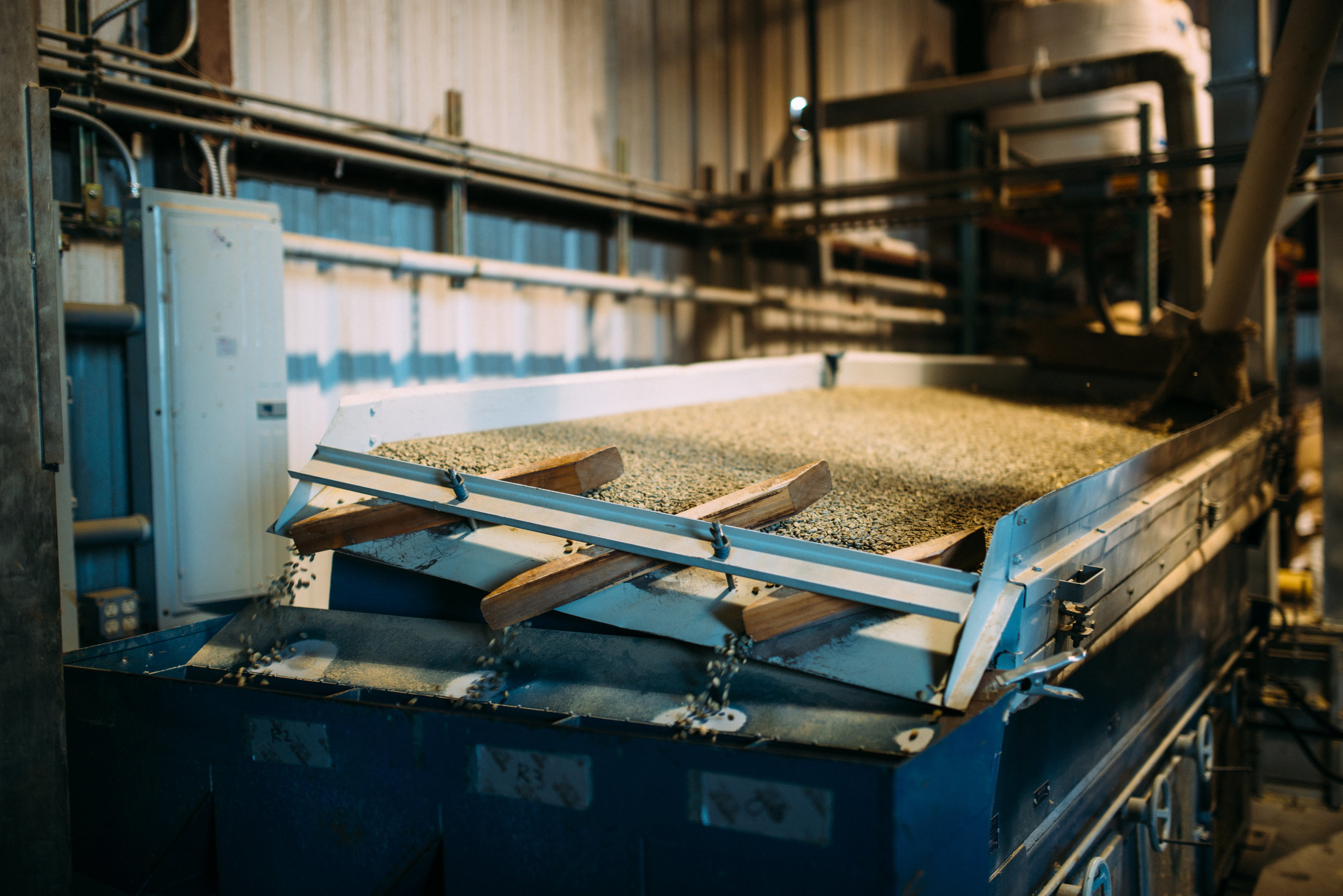 green coffee beans being graded at the Kona Coffee & Tea Mill in Kona, Hawaii. PHOTO: Blake Wisz