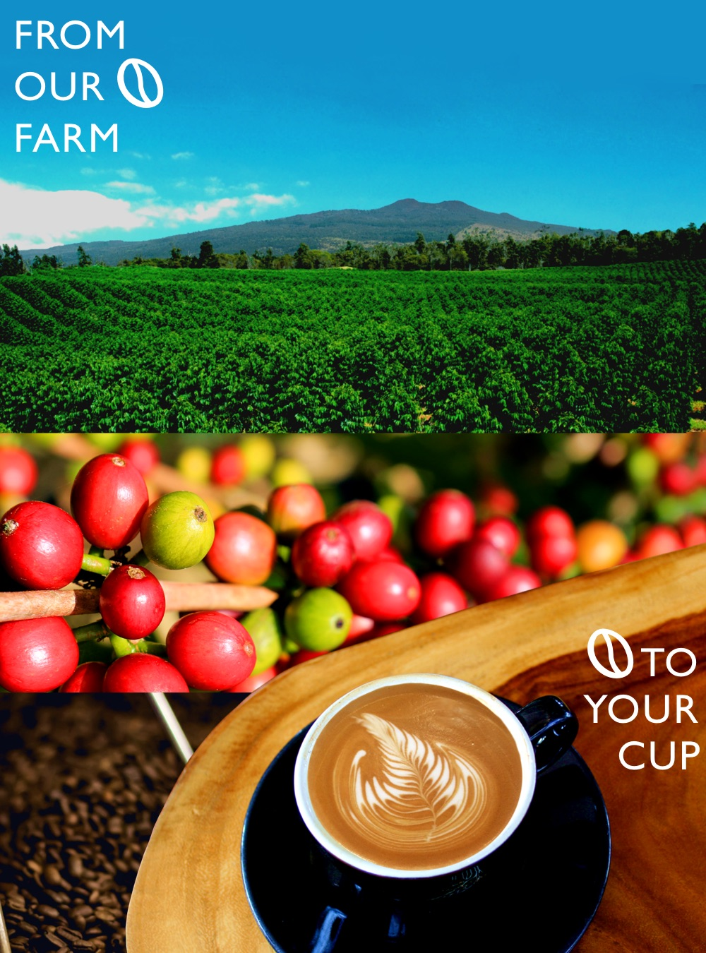 From out Farm to your cup _KCTC.jpg