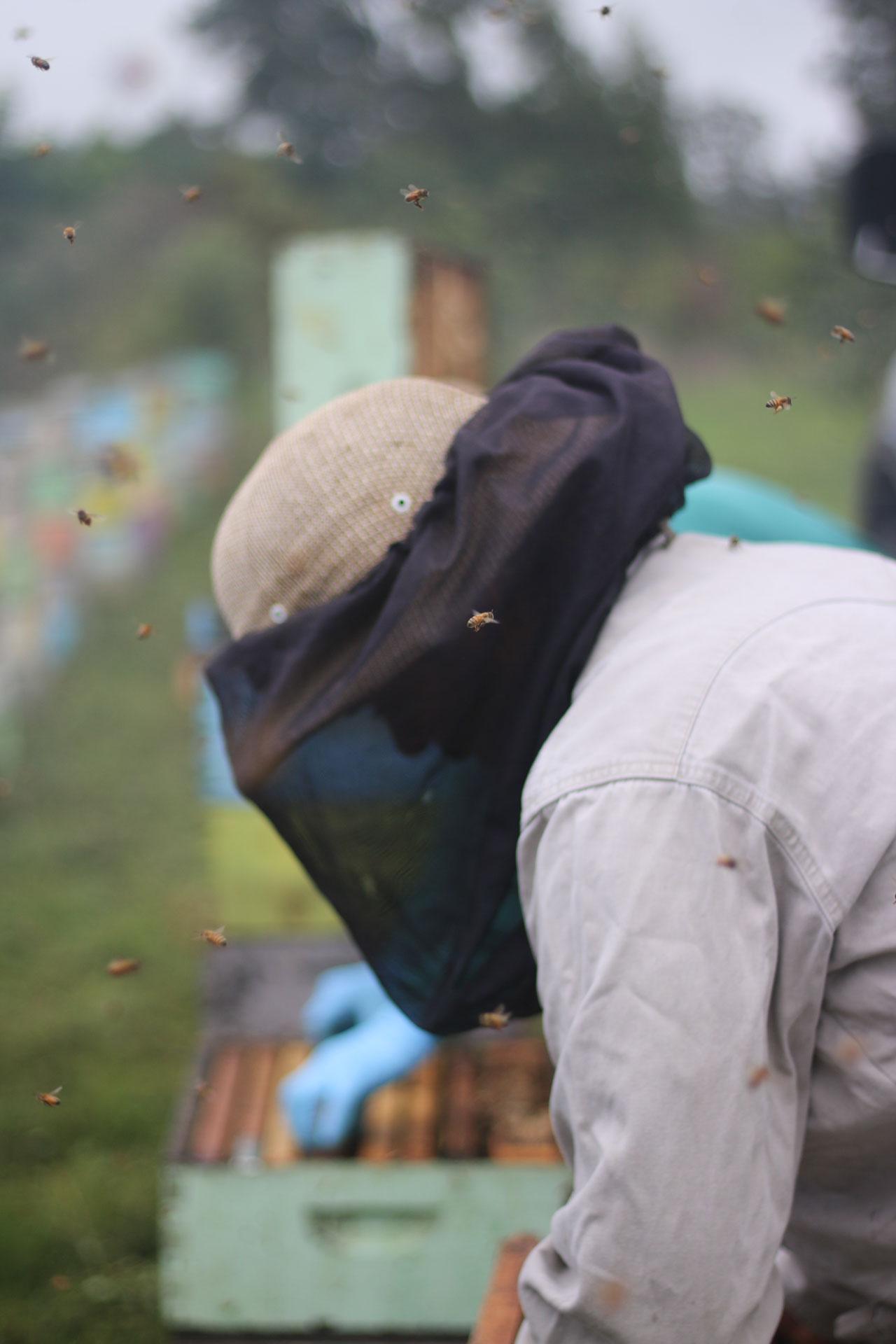 Beekeeper from Kona Queen Hawaii at honey harvest on the Kona Coffee & Tea farm. PHOTO: Chance Ortiz
