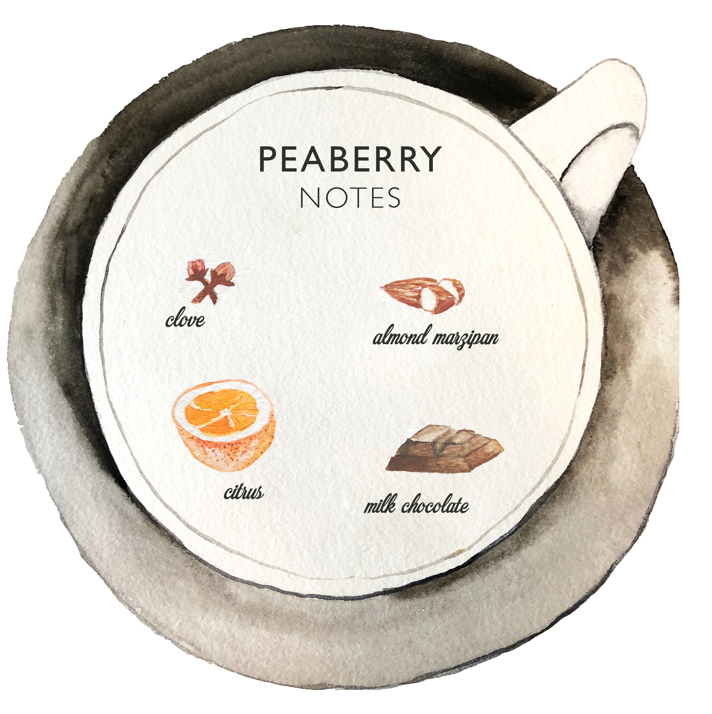 Peaberry notes KCTC watercolor.jpg