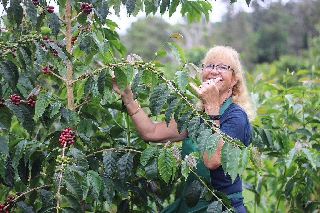 First Harvest — Kona Coffee and Tea Company on kona snorkeling map, pineapple tour map, hawaii tour map, kona hawaii, kona shopping map, kona beach map, ywam kona map, kona road map, kona state parks, kona makai map,