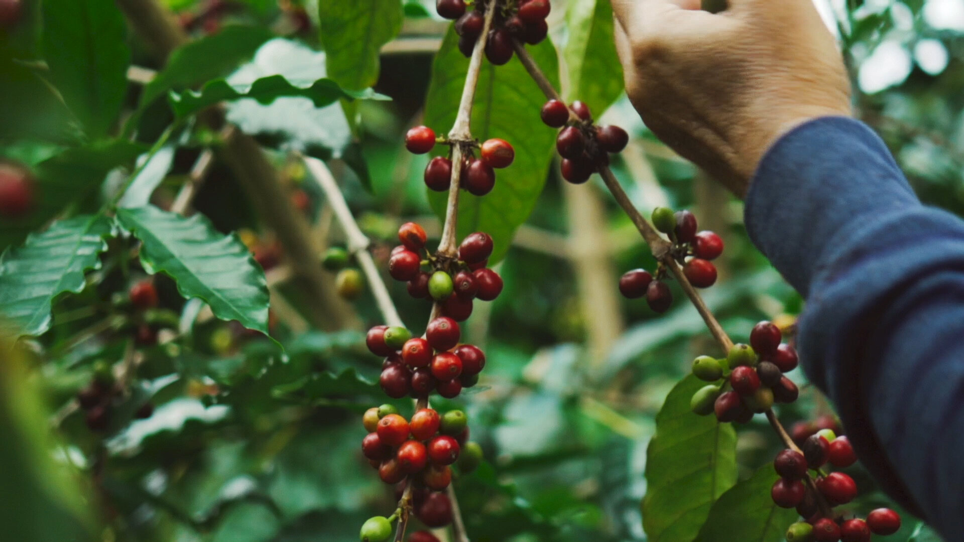 Kona Coffee and Tea Company