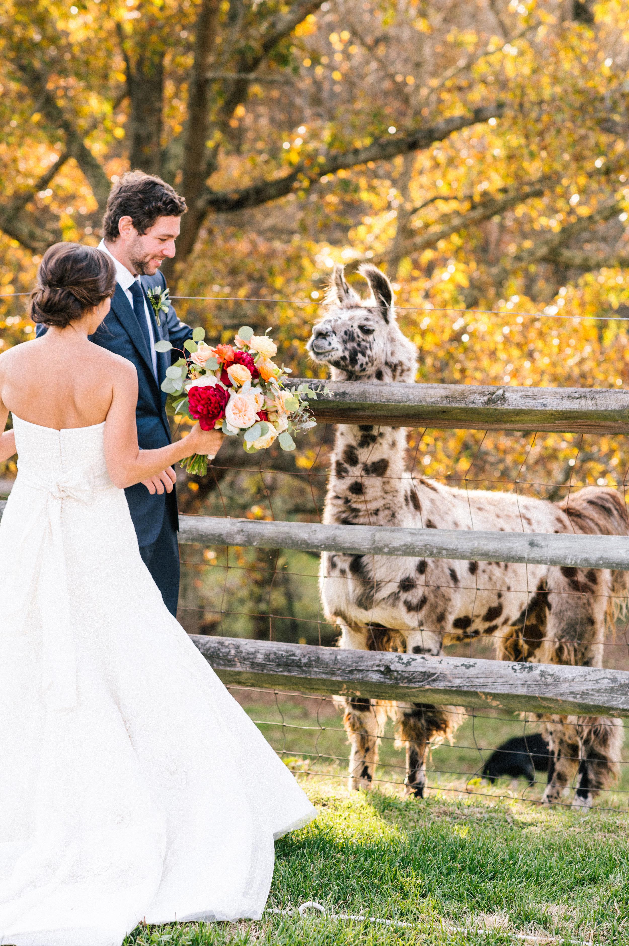 KatieStoopsPhotography-Asheville Wedding47.jpg