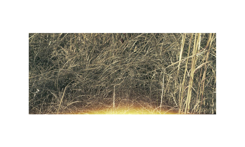 gress.jpg
