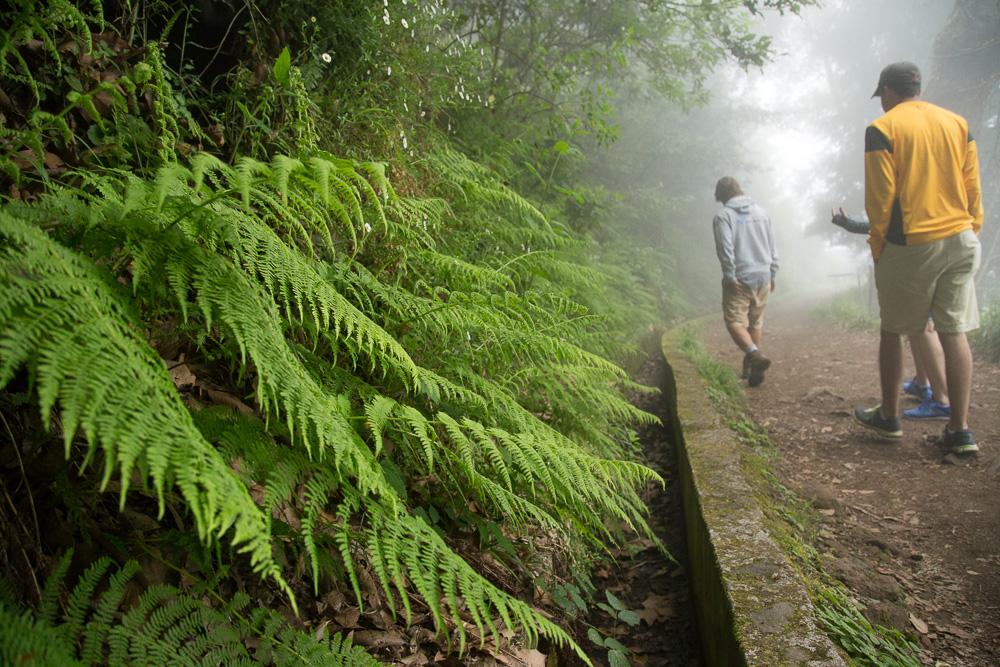 Levada walk to Balcoes | Ribeiro Frio |Madeira Things to Do Travel Blog
