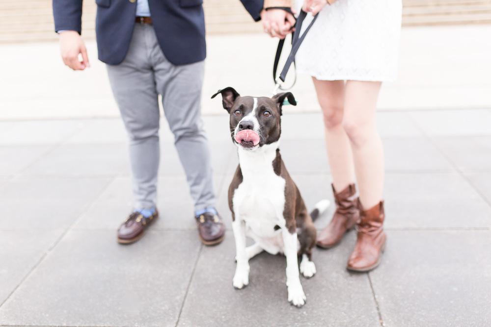 Engagement photos with dog | DC Dog Photographer | Megan Rei Photography