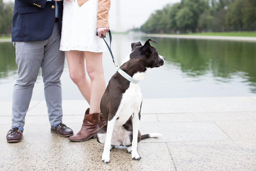 Dog getting distracted by ducks in the Reflecting Pool | Washington DC Pet Photographer