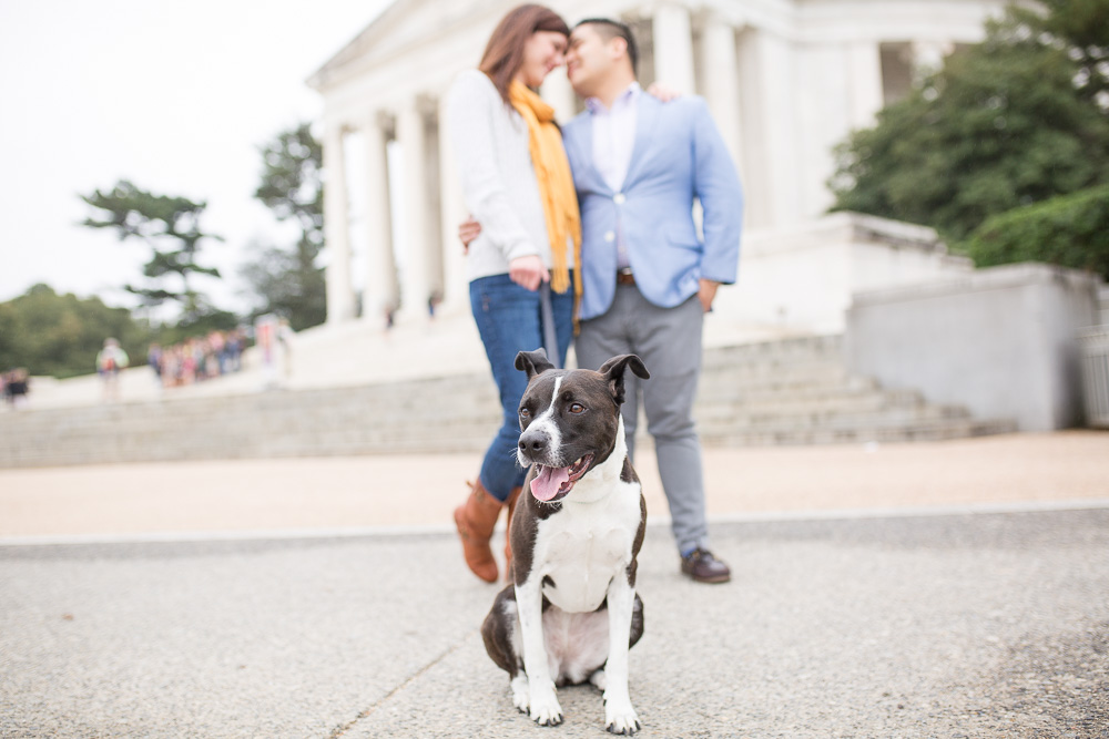 Focus on the dog by the Jefferson Memorial | Washington DC Dog Photographer