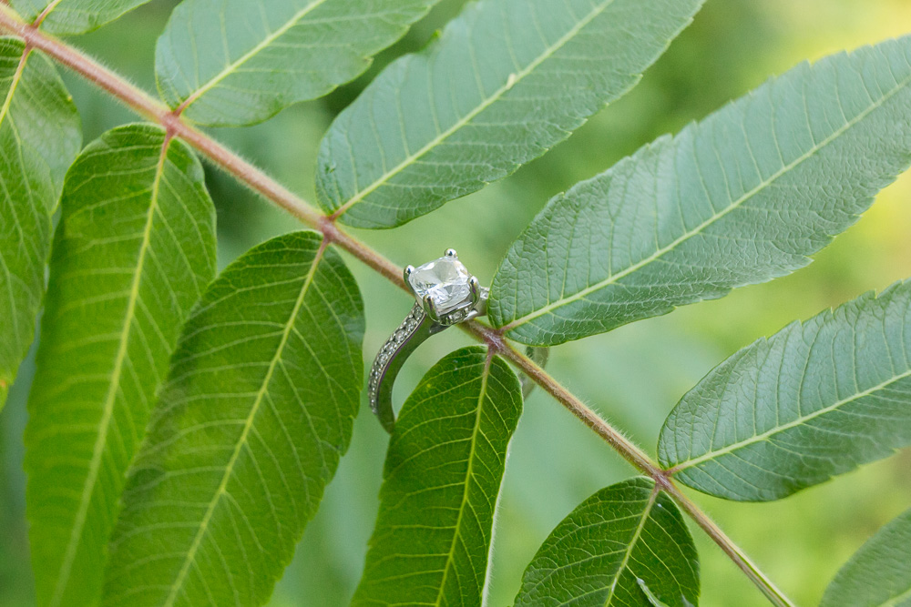 Engagement ring at Cobbs Hill Park