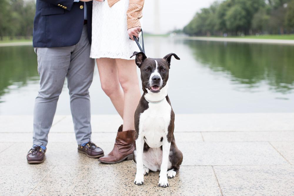 Happy dog during engagement photos | Northern Virginia Pet Photographer | Megan Rei Photography