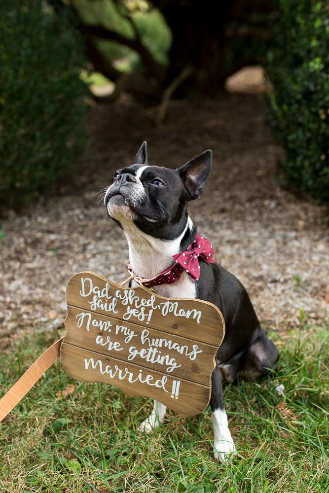 My humans are getting married | Bealeton Virginia Wedding Dog Photographer
