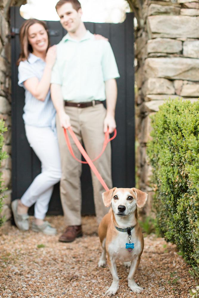 Sweet dog during an engagement session | Warrenton, Virginia Dog Photographer