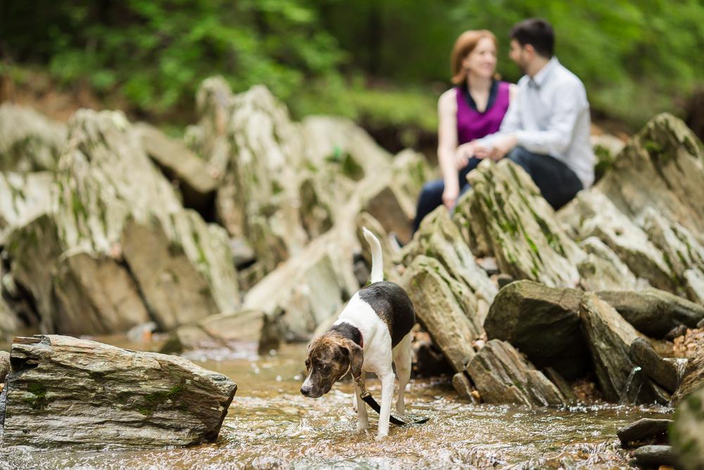 Dog walking through the stream at Scott's Run Nature Preserve