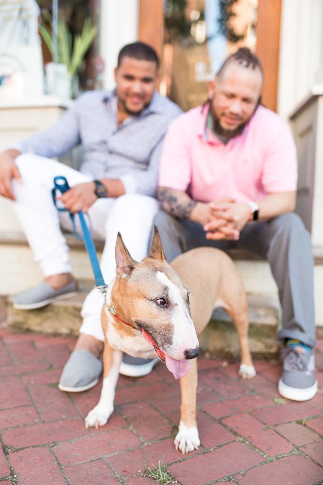 Cute dog photo session in Alexandria, Virginia