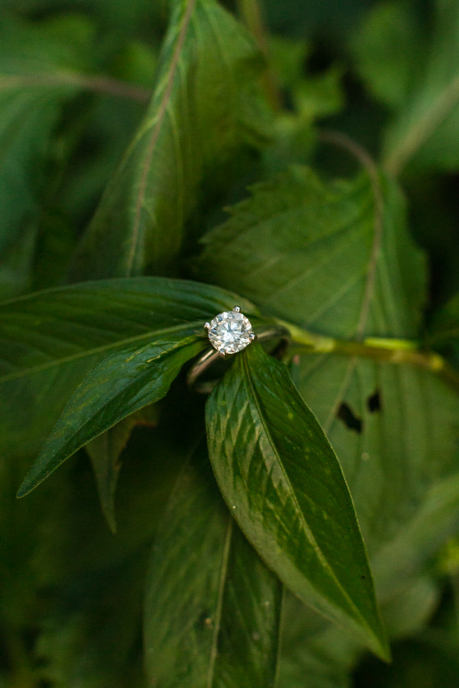 Solitaire engagement ring on green leaves