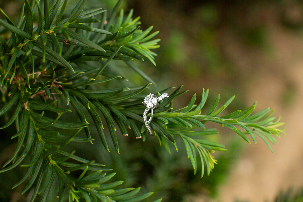 Engagement ring on evergreen tree branch