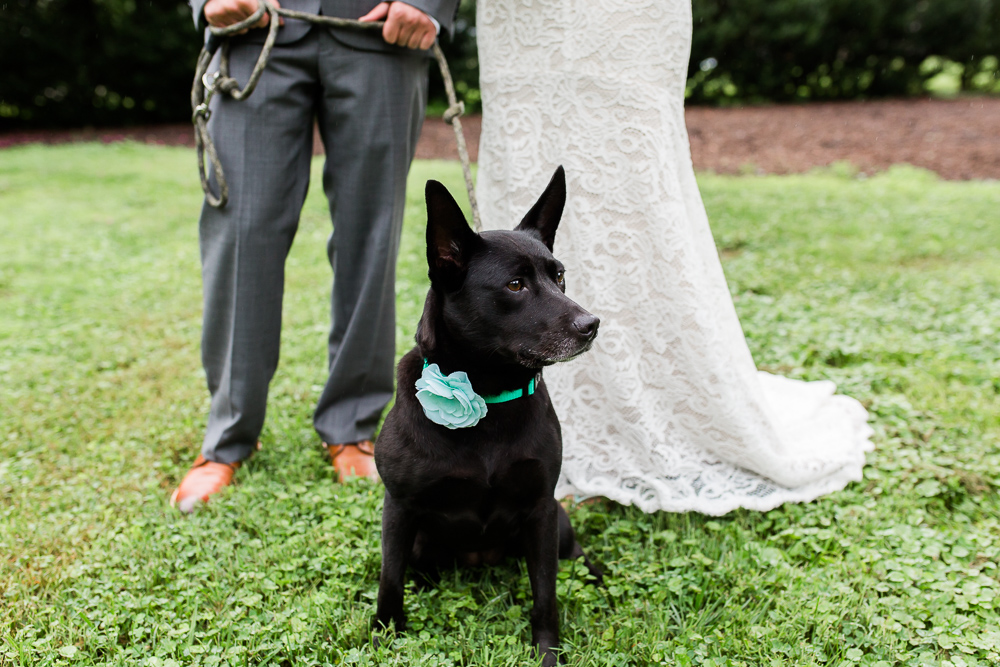 Wedding dog with bride and groom's feet