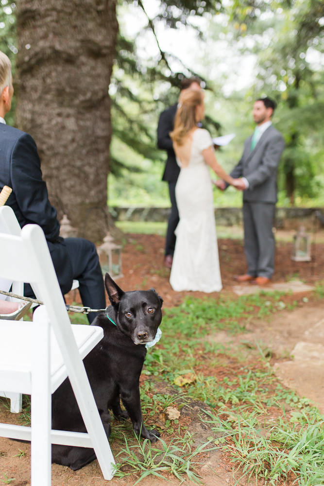 Wedding dog watching the ceremony