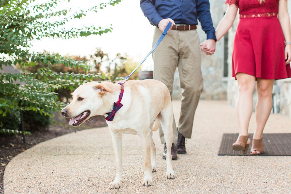 Engagement dog with a bow tie at Blue Valley Vineyard   Northern Virginia Engagement Photography