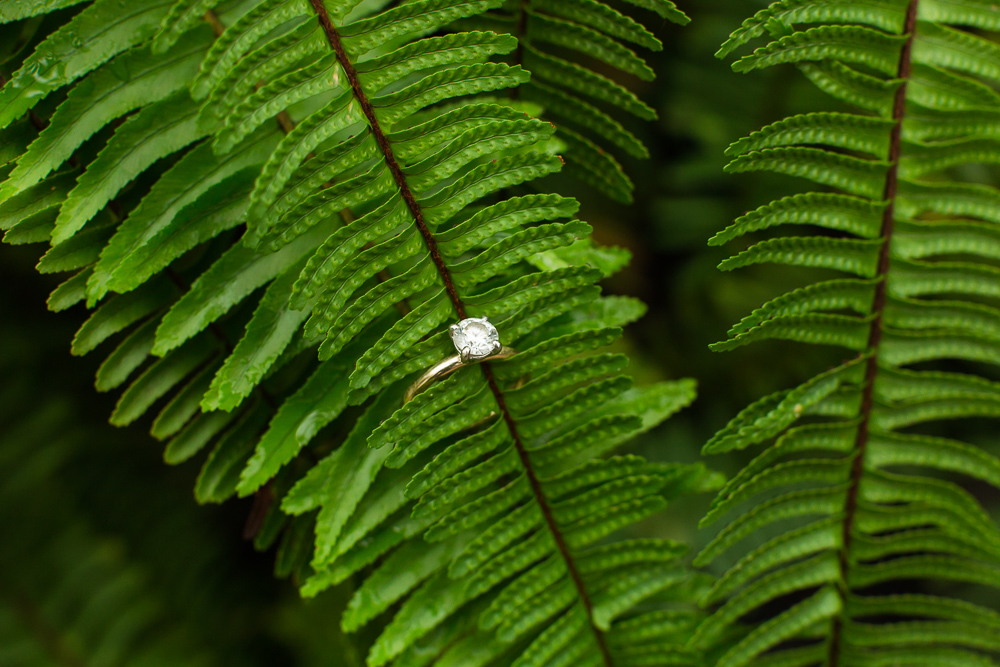 Solitaire engagement ring on a fern during a botanical gardens engagement session