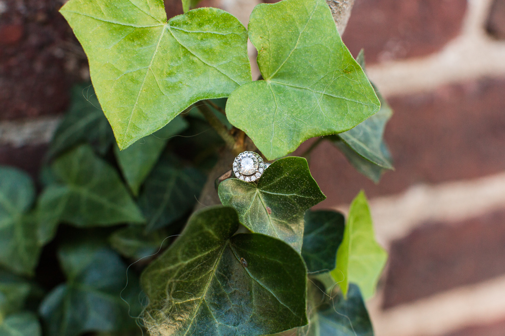Halo engagement ring on ivy in Old Town Alexandria