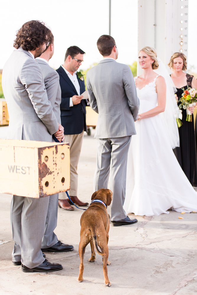 Dog of honor watching her parents get married