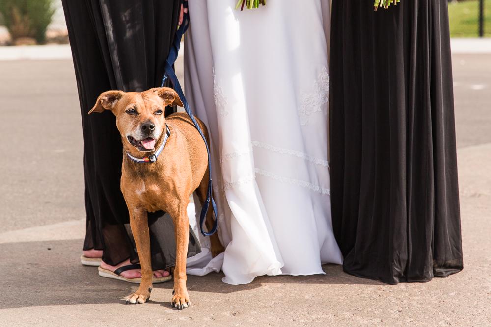 Wedding dog on a sunny fall wedding day in Colorado