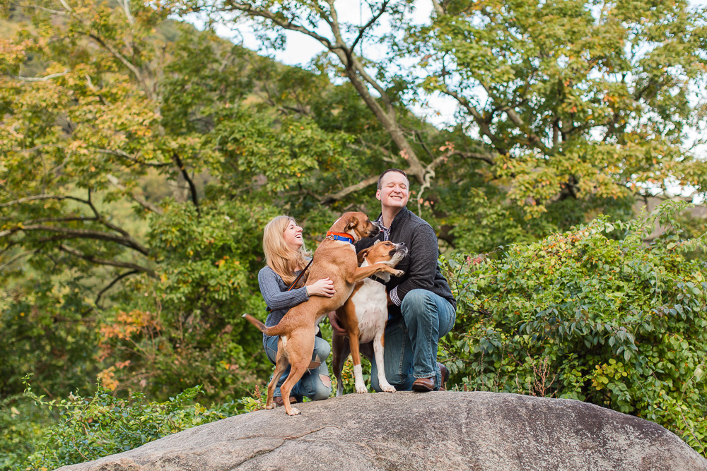 Candid photo of one dog getting jealous of the other during photo shoot at Bear Mountain