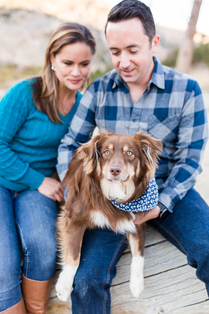 Sweet miniature Australian shepherd with his outdoorsy parents