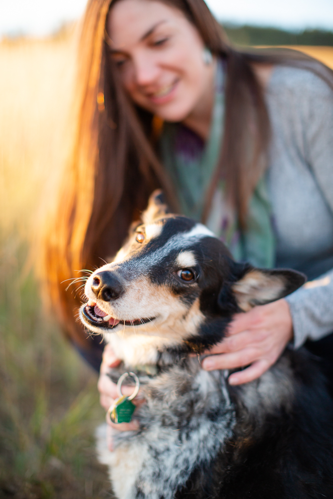 Smiling Australian cattle dog during a hike at Chautauqua Park in Colorado