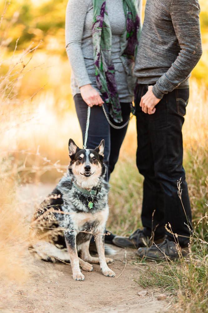 Hiking dog photo session with Australian Cattle Dog in Colorado