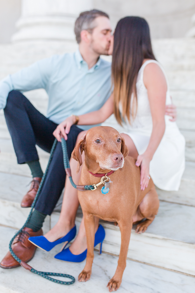 Vizsla sitting on steps of the Jefferson Memorial while her parents kiss during engagement photo session